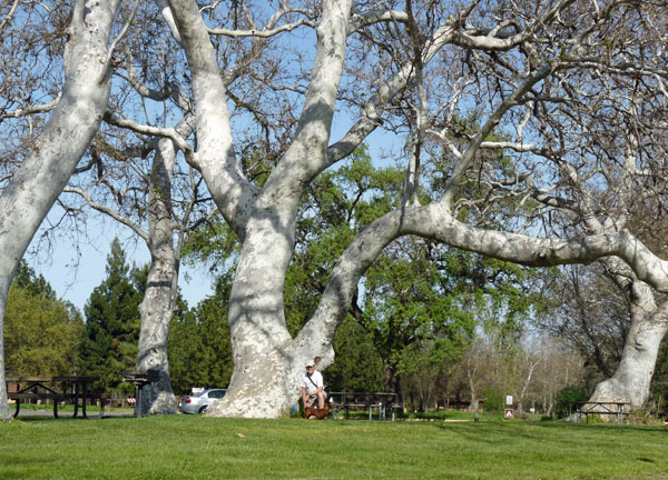Mendocino National Forest Sycamore Grove Campground Red