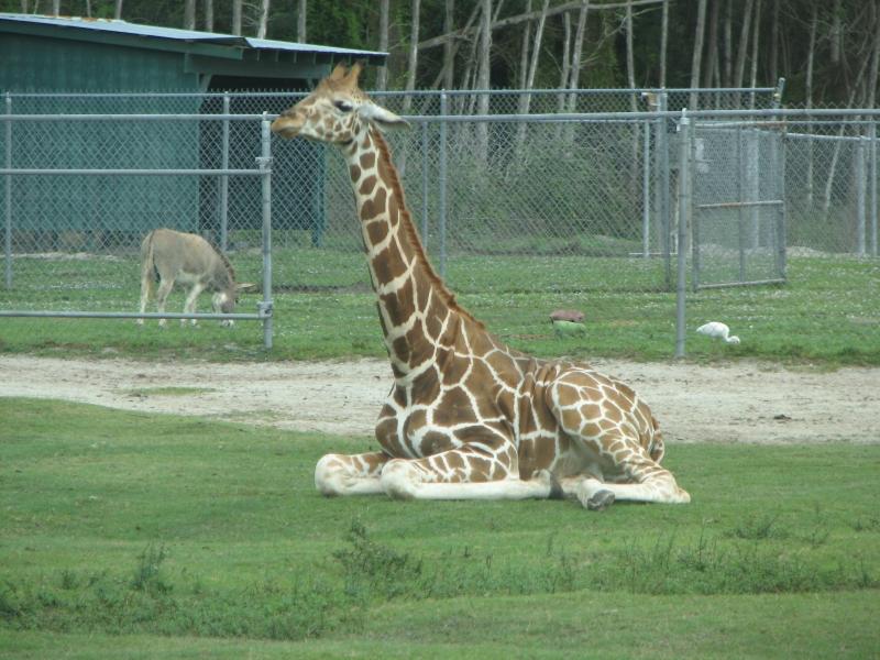 Koa campground lion country safari autos post for Lion country safari cabins