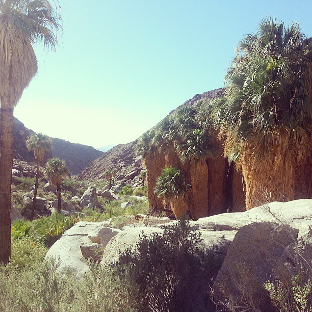 Anza Borrego Desert State Park Campgrounds