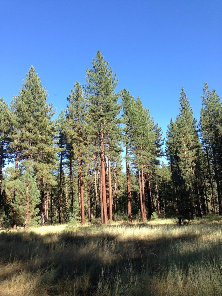 South Lake Tahoe RV Parks | Reviews and Photos @ RVParking.com